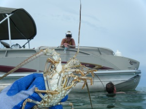 Where Is Your Next Lobstering Vacation Florida Lobstering